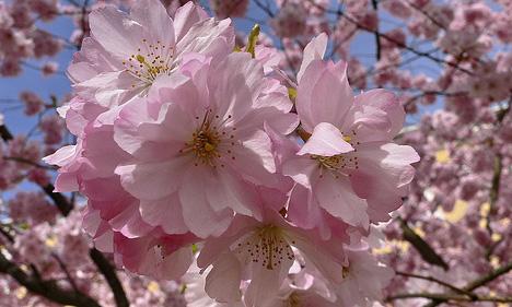 Der Frühling lässt Bäume blühen und Herzen erwärmen. Es ist wiede